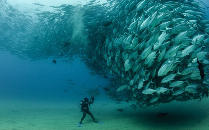الگوریتم دسته ماهی های مصنوعی