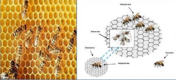 کد موازی کلونی زنبور عسل paralell ABC