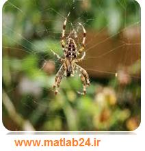 الگوریتم بهینه سازی عنکبوت اجتماعی SSA